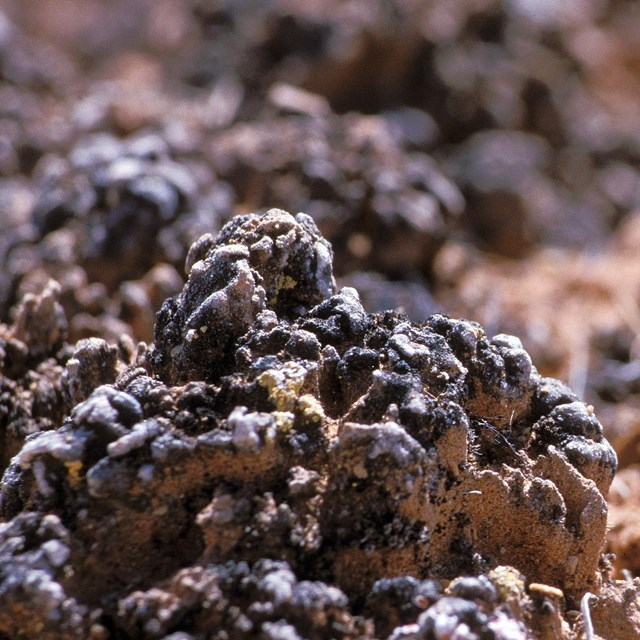 black, knobby soil crust