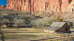 Pendelton Barn and Gifford House below Fruita's Wingate Sandstone Cliffs