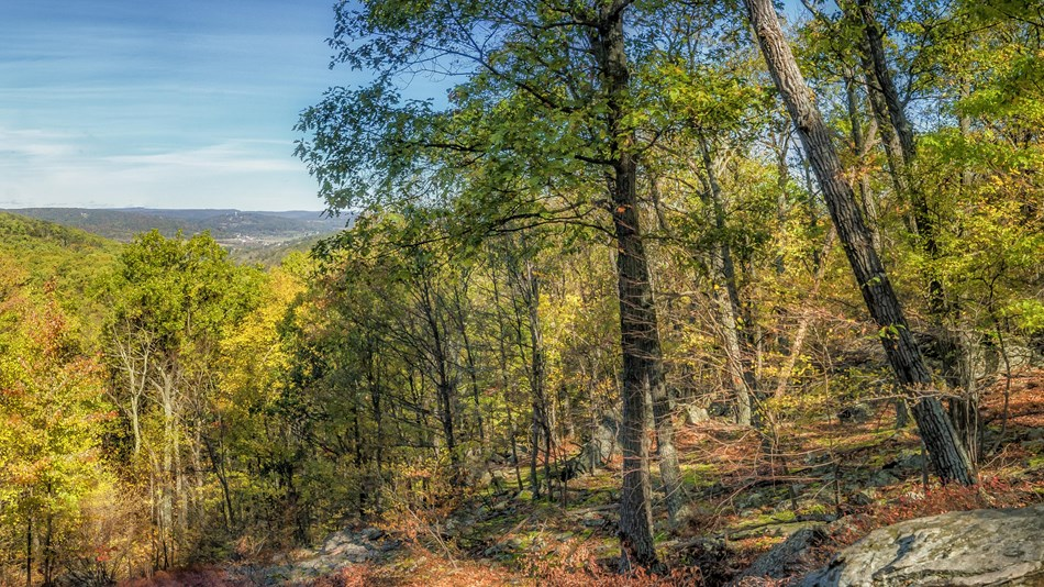 Fall foliage on display at the Hog Rock Overlook
