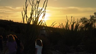 Children watch bats return to Carlsbad Cavern at dawn.