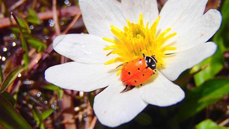 white flower with lady bug