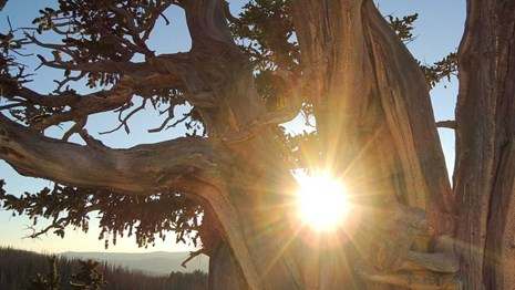 Sun shining between the branches of an old tree.