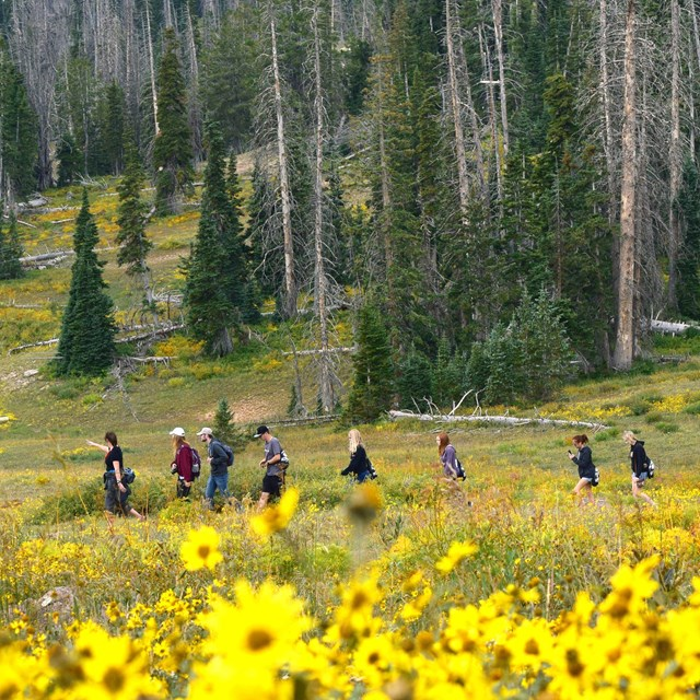 Group of students hiking through a field of flowers.