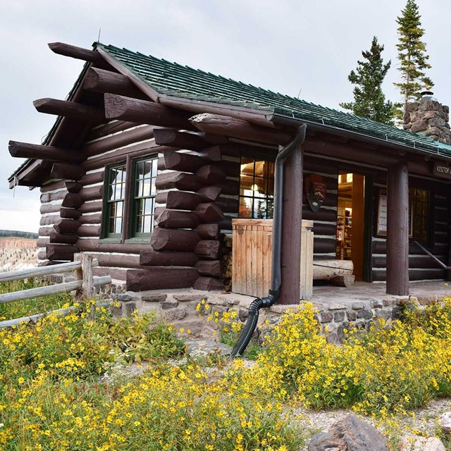 Old log cabin building with yellow flowers in front.
