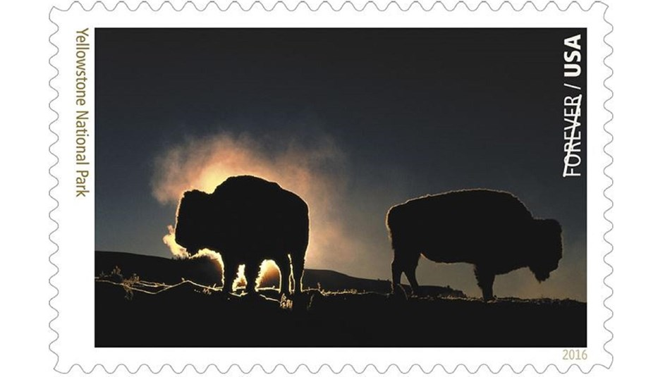 Stamp depicting bison silhouetted at night