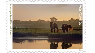 Stamp featuring ponies of Assateague Island