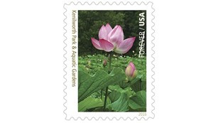 Stamp featuring a lotus