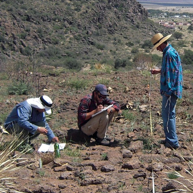Scientists collecting plant data in the desert.