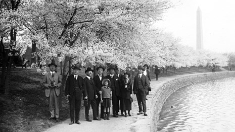 Turn of the century photo of Japanese visitors at the cherry blossoms