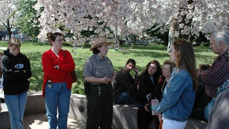 Park ranger talks to visitors under cherry tree blossoms