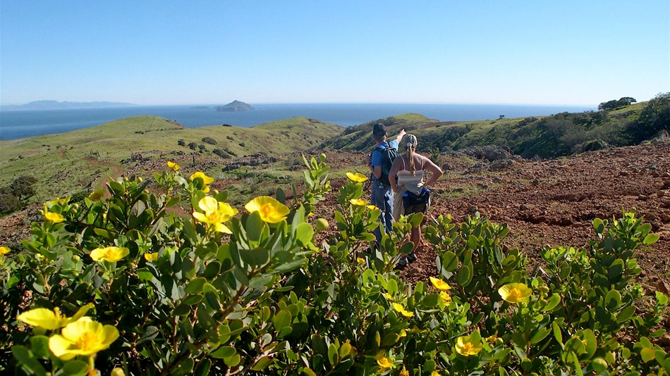 hikers standing on hillside overlooking ocean, islands, and flowers.