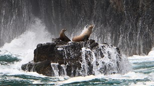 Two sea lions on rock with waves crashing. ©Tim Hauf, timhaufphotography.com