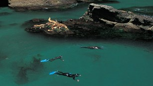Snorkelers in green water with sea lions. ©Tim Hauf, timhaufphotography.com