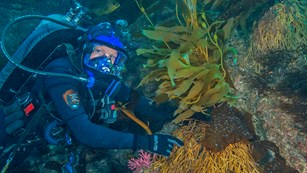 Diver pointing to kelp forest holdfast. ©Brett Seymour, National Park Service