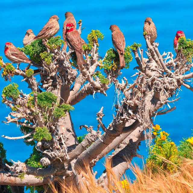 Brown and red birds perched on plant. ©Tim Hauf, timhaufphotography.com