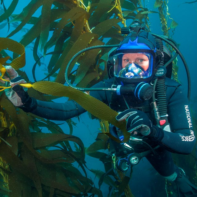 Diver in kelp forest wearing mask to speak to public.