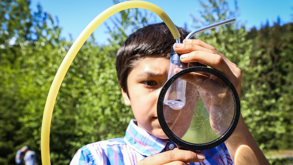 a boy looks at a bug with a magnifying glass