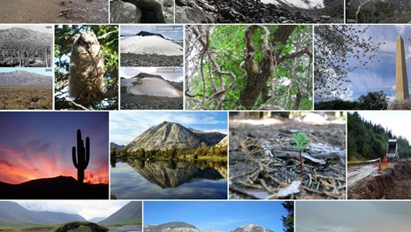 Collage of national park photos