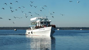tour boat on water with birds in sky