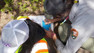 CDRLC staff member assists in dragonfly larvae collection