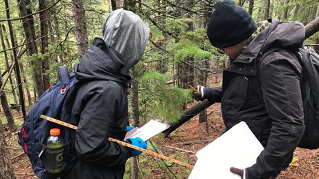 Citizen scientists monitoring forest changes