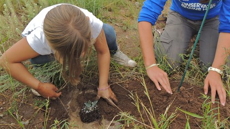 A child and an intern plant an agave in a grassland field