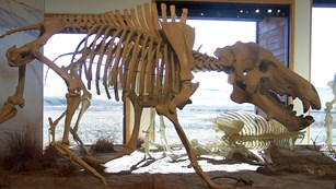 Large four-legged fossil constructed in diorama display