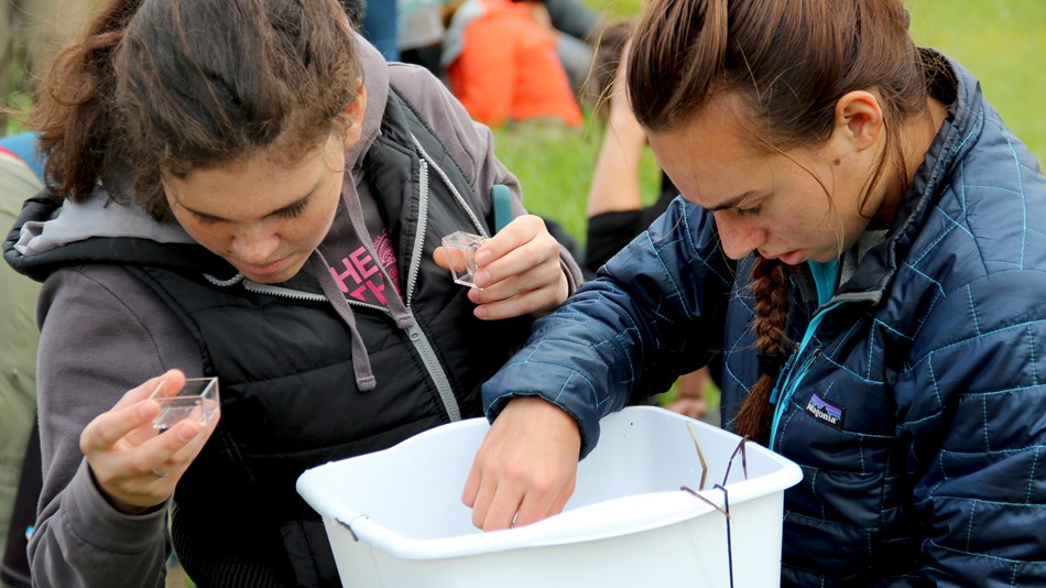 Two students, one with a glass magnifying box, sift through the contents of a white, plastic tub.