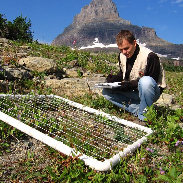 Young man squats next to plant grid, filling out data sheet with mountain in background.