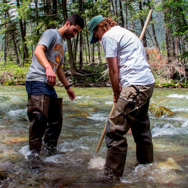 Two teachers with waders on stand in a stream, dipping a net in the water.