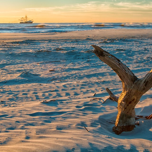 driftwood protrudes from the beach while a boat passes on the horizon