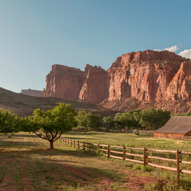 Orchards, cliffs, a barn, and a wooden fence glow in late day sun at Fruita.