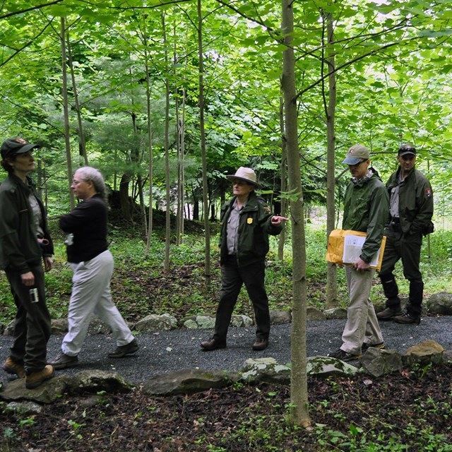 National Park Service staff walk along a stone-lined pathway through a forest of young trees.