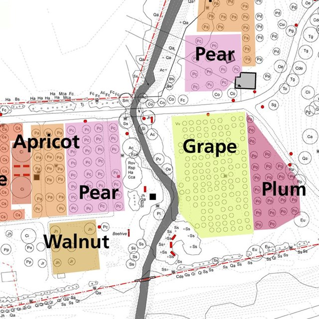 Colored areas on a site plan indicate the historic system of orchard blocks at John Muir NHS.