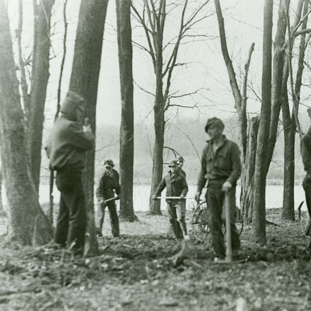 A group of CCC workers use tools to clear brush around sparse trees at Theodore Roosevelt Island.