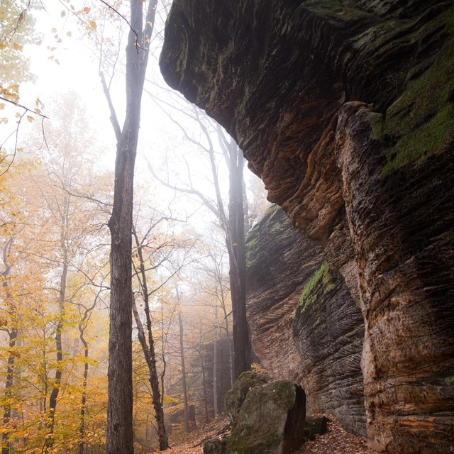 An overhang of sandstone towers over a leaf-strewn trail; yellow leaves hang on trees to the left.