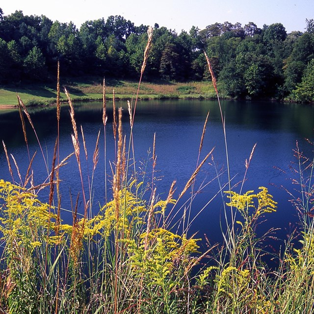 A lake surrounded by vegetation: tall trees on the far shore; in the foreground: yellow wildflowers.