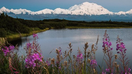 snow covered Denali stands tall over a lake