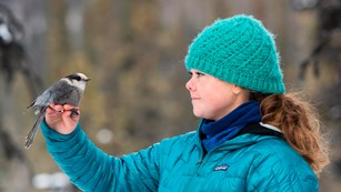 Woman holds gray bird in her outstretched arm