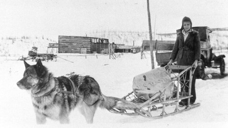 a dog pulling a woman on a sled