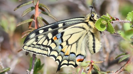 swallowtail butterfly perched on branch