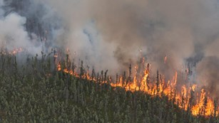 Fire burns through a spruce forest as smoke fills the air