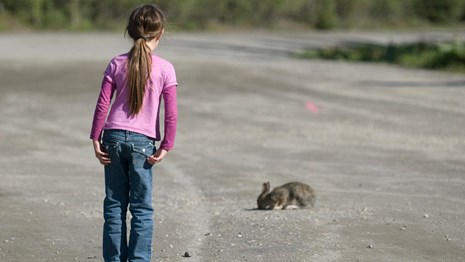 a girl stands to watch a snowshoe hare from an appropriate distance