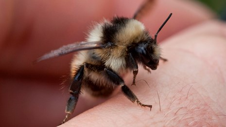 a bumble bee sits on a hand