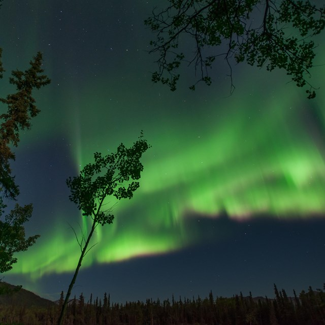 green aurora borealis in a dark night sky
