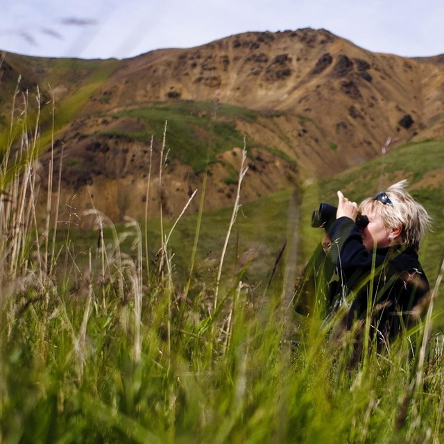 a woman uses her binoculars while hiding in tall grass