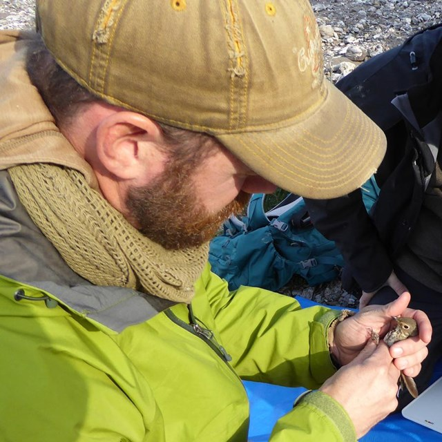 a group of researchers attach a geolocator to a small bird