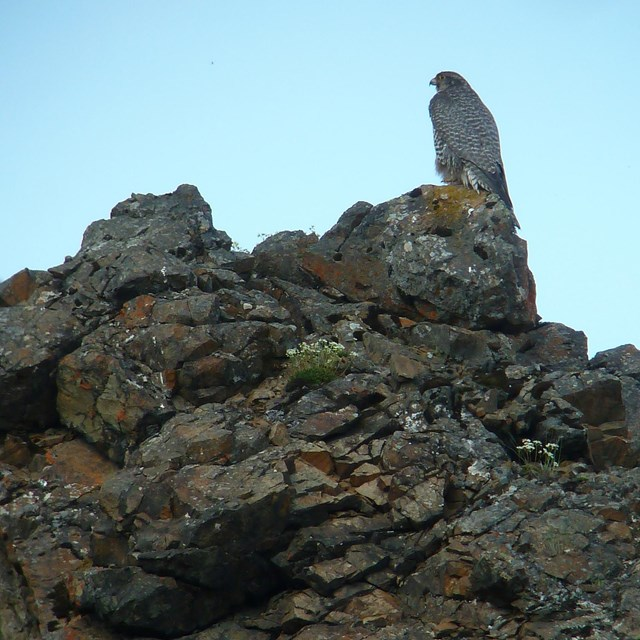 Large brown bird sits on a cliff
