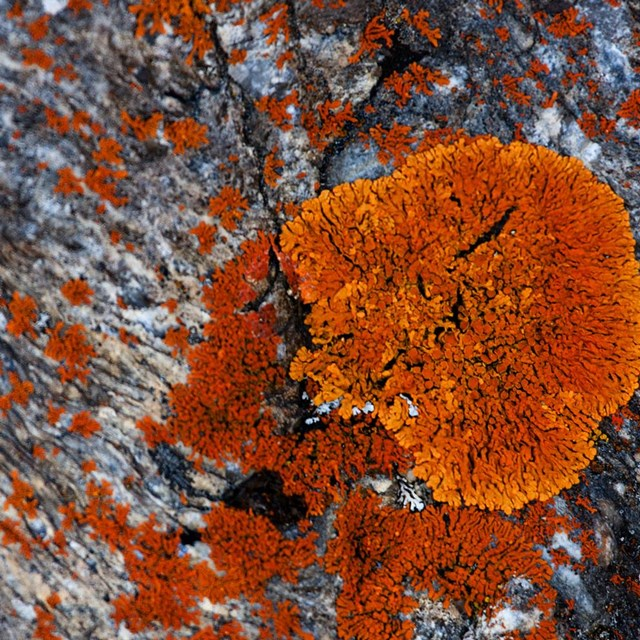 a rock is covered with orange splotchy lichen