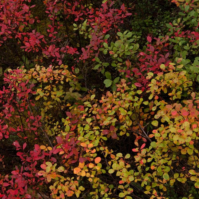 bright colored short shrubs carpet the ground